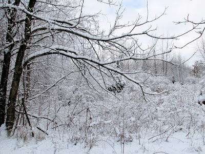 Snow in  wooded area