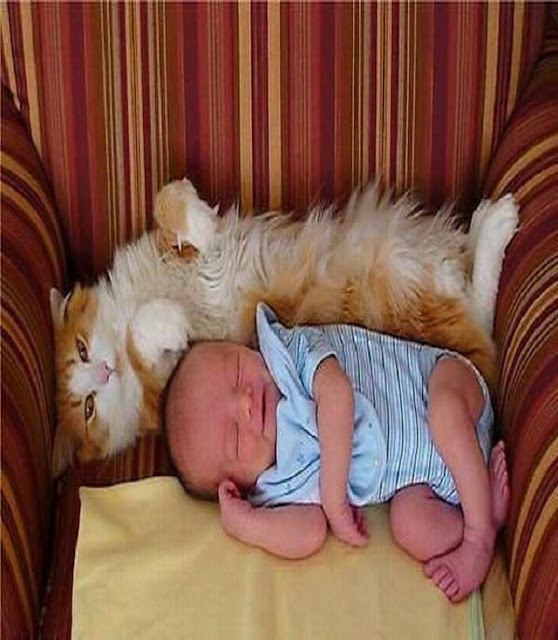 bébé très beau qui dort à côté de son chat