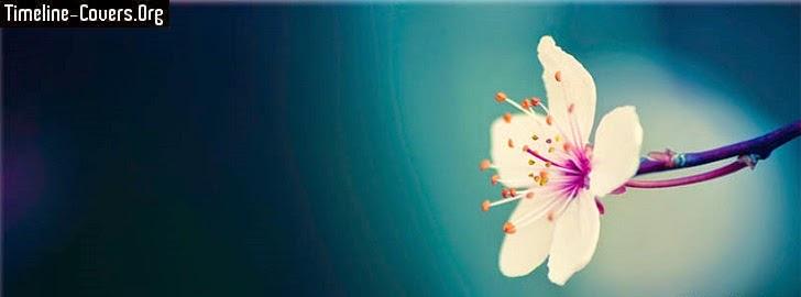 Spring Flower Facebook Cover