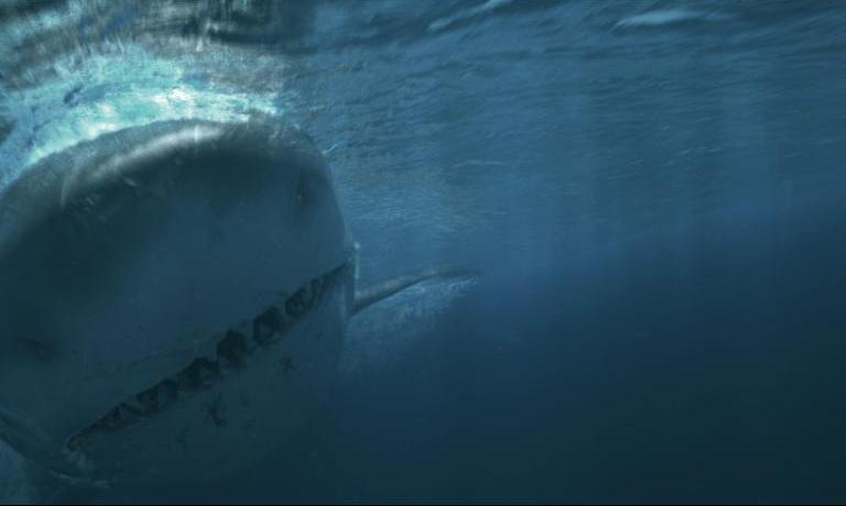 Real Megalodon Shark Sightings