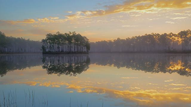 Long Pine Key in Everglades National Park, Florida (© Tandem Stills + Motion) 680