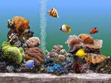 el acuario en los peces