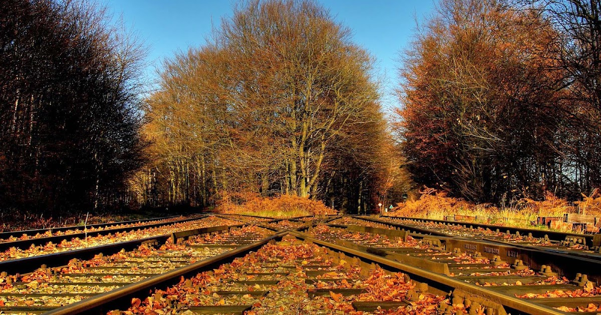 herfstbladeren op het treinspoor