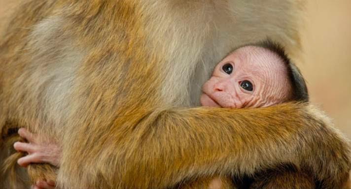 Monkey Kingdom Baby Monkey Monkey Kingdom Looks Like it