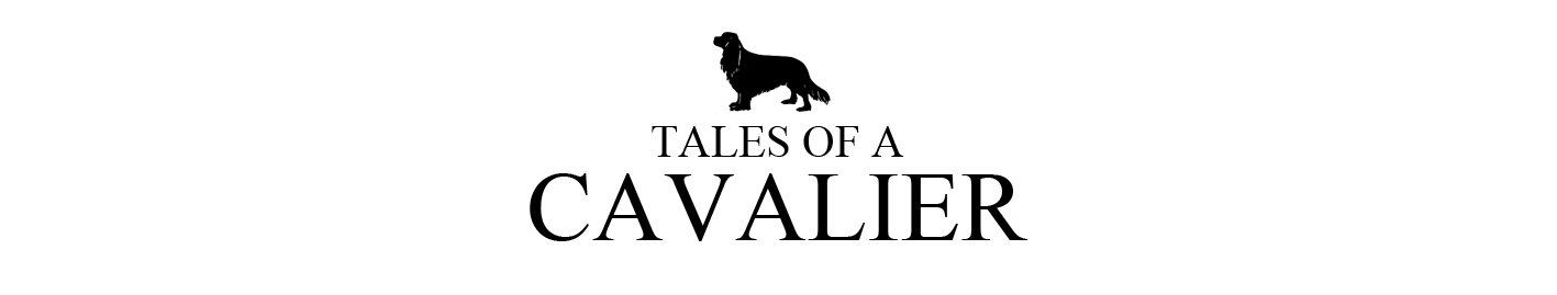 Tales of a Cavalier
