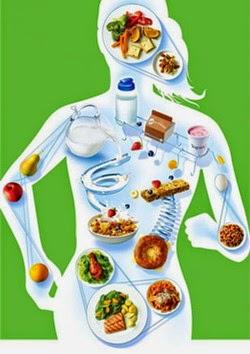 Основной обмен, метаболизм