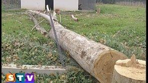Έκοψε δέντρο αλλά αυτό έπεσε μέσα στο κυνοκομείο