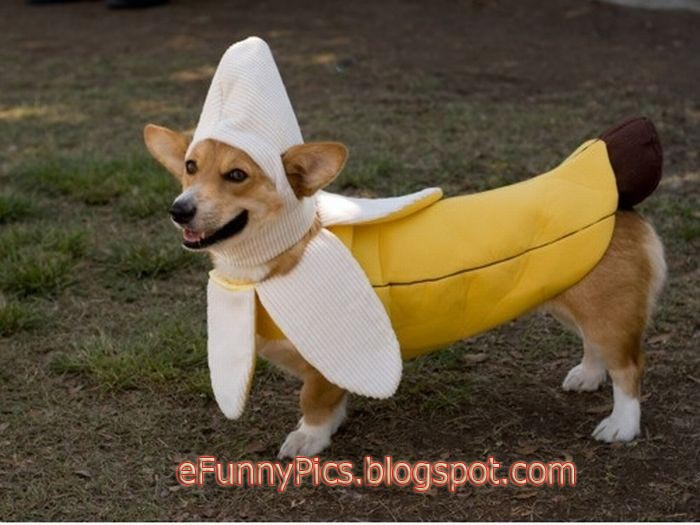 Funny Dog with Banana Cover