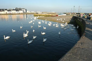 Gearing up for a trip to Galway City - the swans at the Claddagh