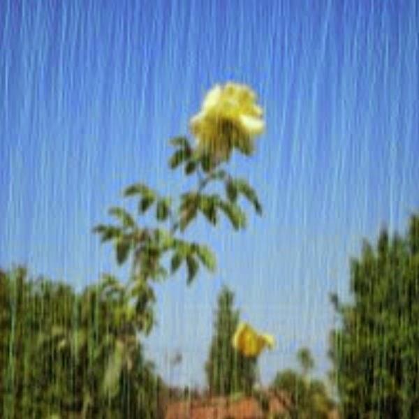 A chuva, precipitação da água no ciclo hidrológico da natureza.
