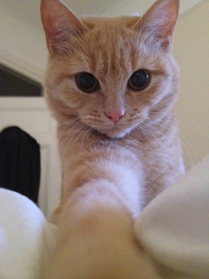 kucing-kucing selfie yang lucu banget
