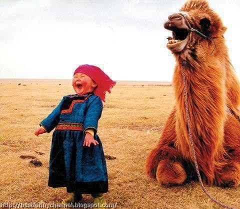 Funny baby and camel.