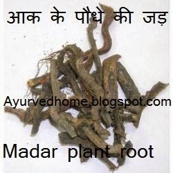 root of madar plant for Naaru Diseases
