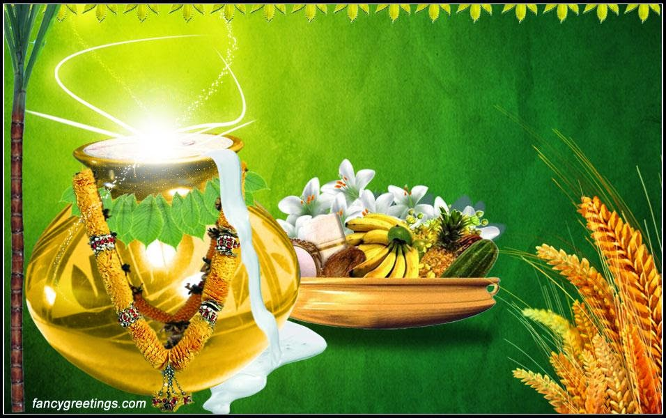 pongal wishes images download