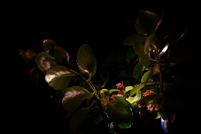 Lights&#160;& Plants 2