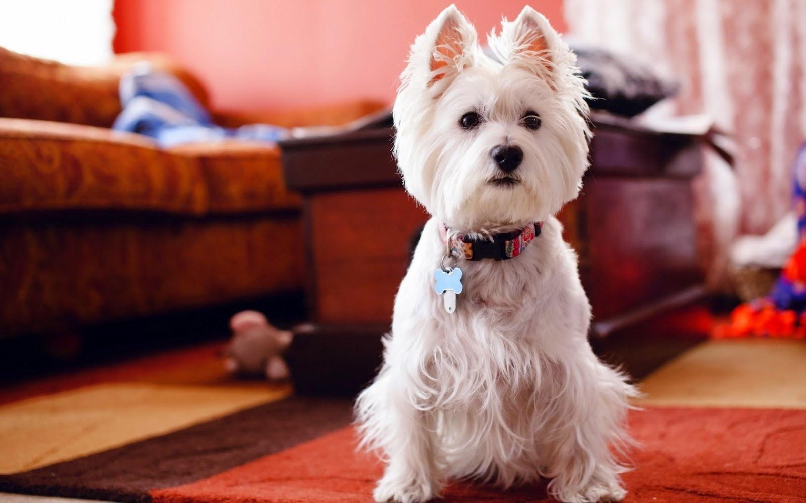 Cómo saber si mi perro me quiere: cuidados y nombres para tu mascota. Perro adorable