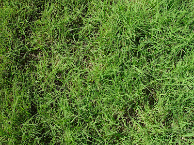 http://3.bp.blogspot.com/-qwMp4R_JWXQ/TlycVDeXo4I/AAAAAAAAAgk/D08g-Wodnm8/s400/lawn-texture-la.jpg