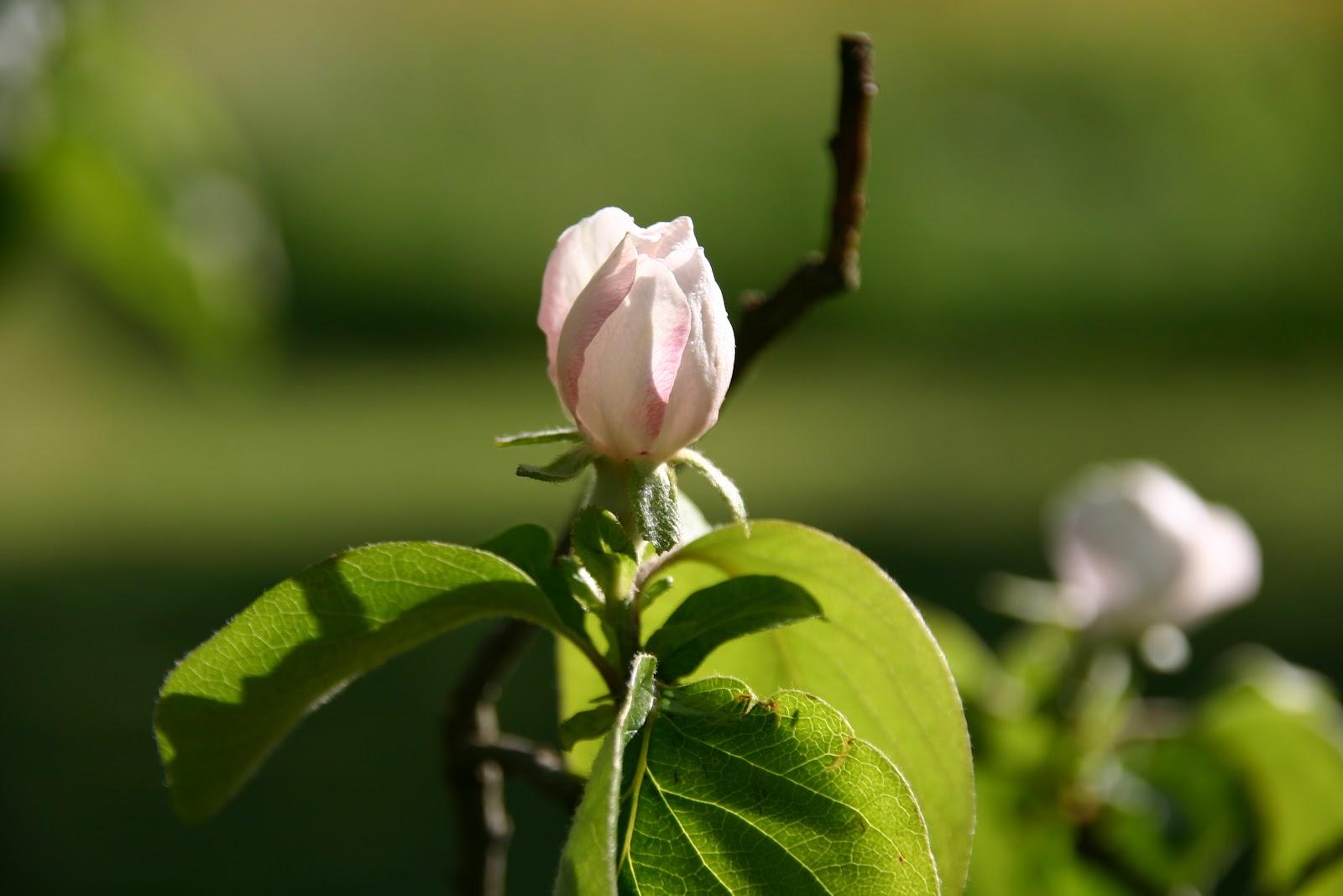 Verger des prouelles le printemps dans toute sa splendeur for Foyer colette yver rouen