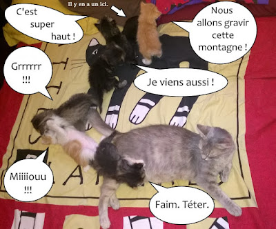 Chatte et ses sept chatons.