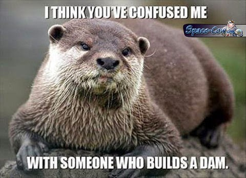 funny animals otter picture