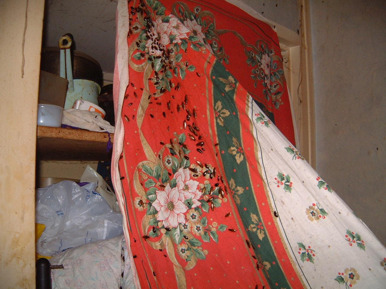 Préférence Invasion de Cafards, Blattes dans appartement | Laboratoire  QH12