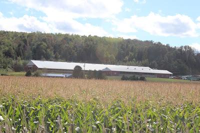 big+barn+and+corn.jpg
