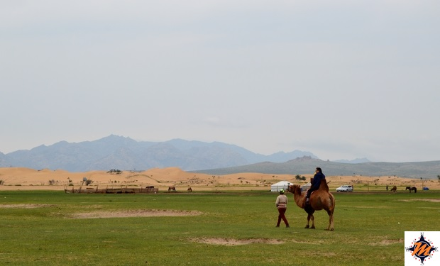 Mongol Els