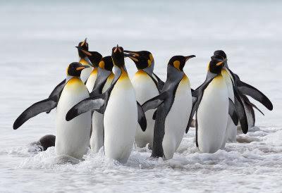 Pingüinos de la Antártida con elevados niveles tóxicos de cadmio y selenio