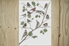 Poster Birds Limited Edition