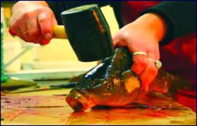 Obraz: zabijany karp przed Wigilią