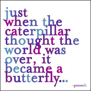 proverb, change, caterpillar, butterfly