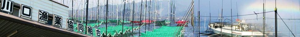 ハマグリ,アサリ,熊本海苔なら川口漁業協同組合