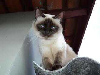 Mamãe minha eterna gatinha (em memoria).