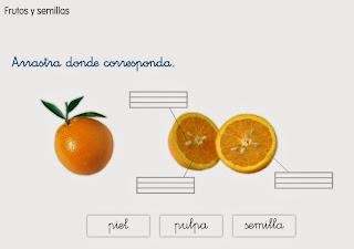 http://www.ceiploreto.es/sugerencias/cp.juan.de.la.cosa/1_2/cono/actividades/08/05/visor.html