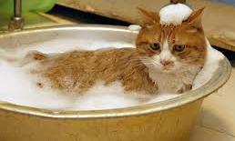 Cat Bath