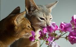 ...les chats et les fleurs