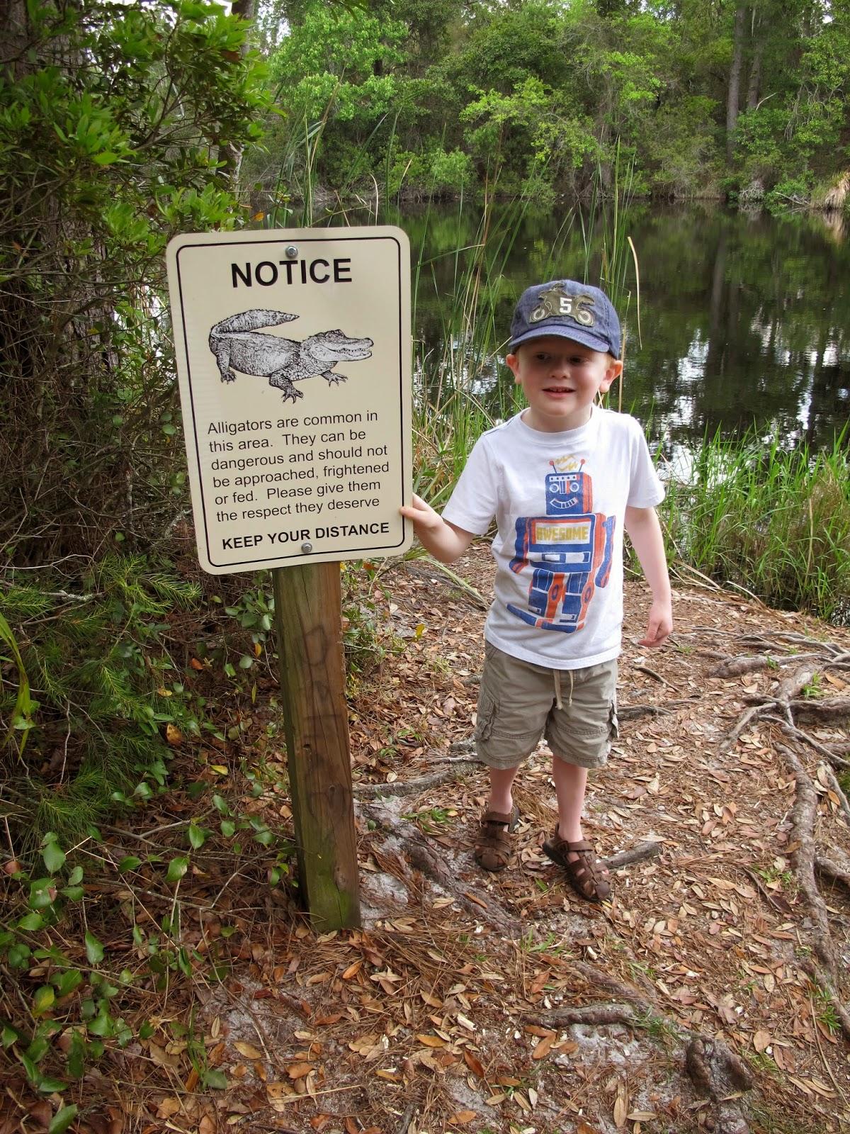 Alligator Alert