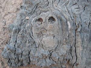 اشجار غريبة ومرعبة في العالم Trees, strange and terrifying in the world  Human_Shape_Strange_and_funny_Tree+%25281%2529