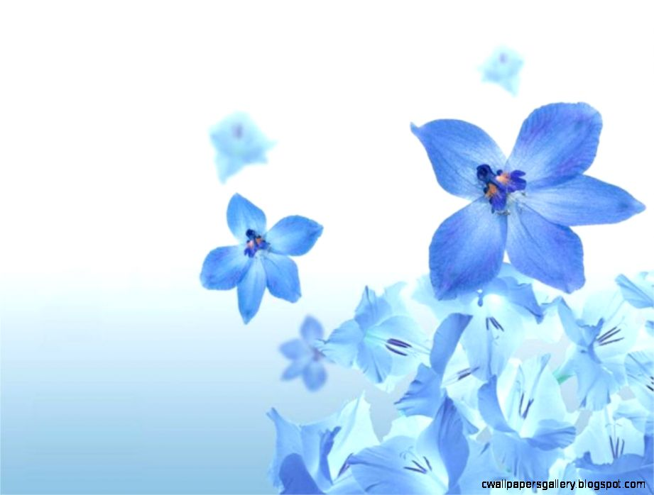 Blue Flower Wallpapers Pack 99 43 Blue Flower Wallpapers Collection