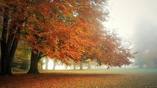 Gran árbol de otoño & hojas
