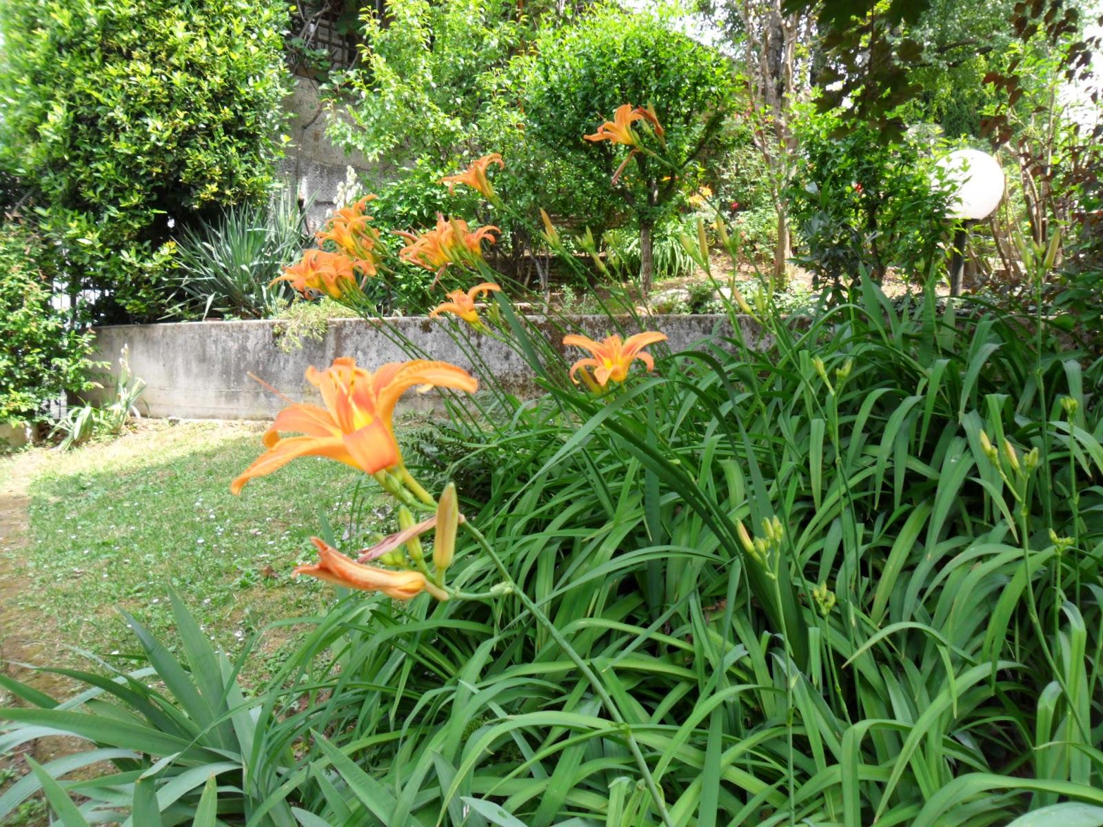 Ilclanmariapia dal mio giardino - Sistemare il giardino ...