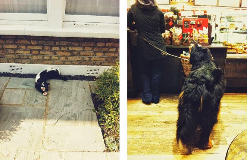 Neighbour's Cat // Stranger's Dog
