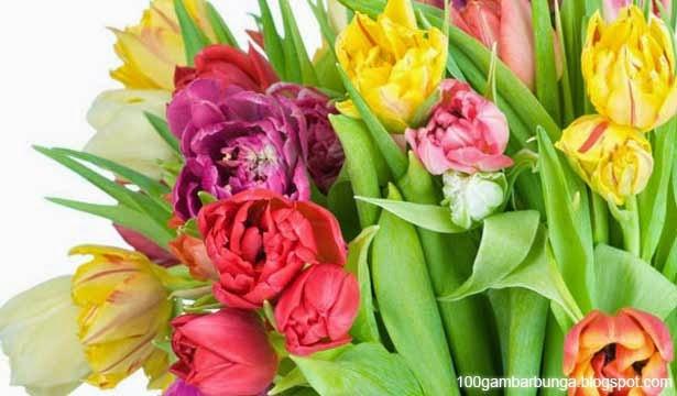 Jenis-Jenis Tulip