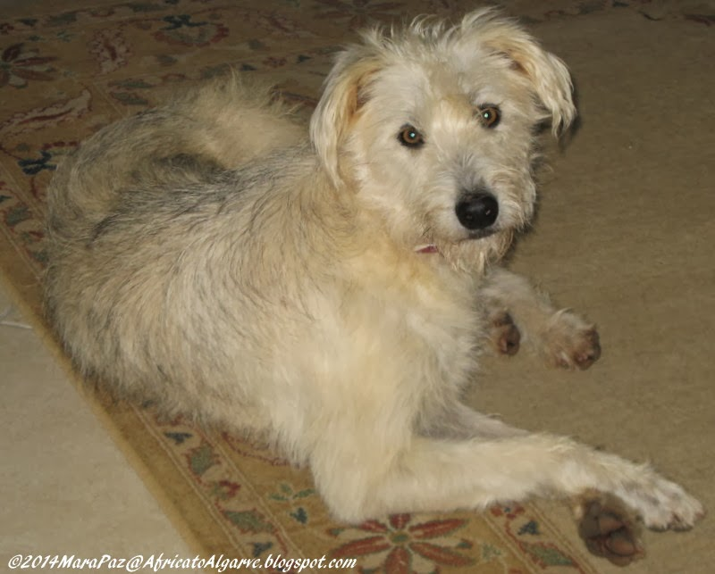 Rescue dog - undefined breed