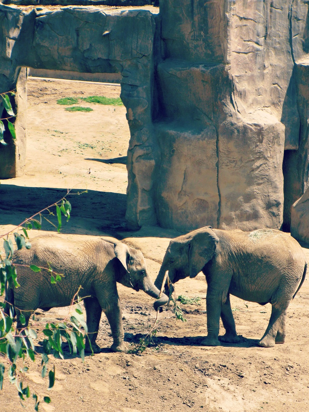 San Diego Safari Park // Elephant Love