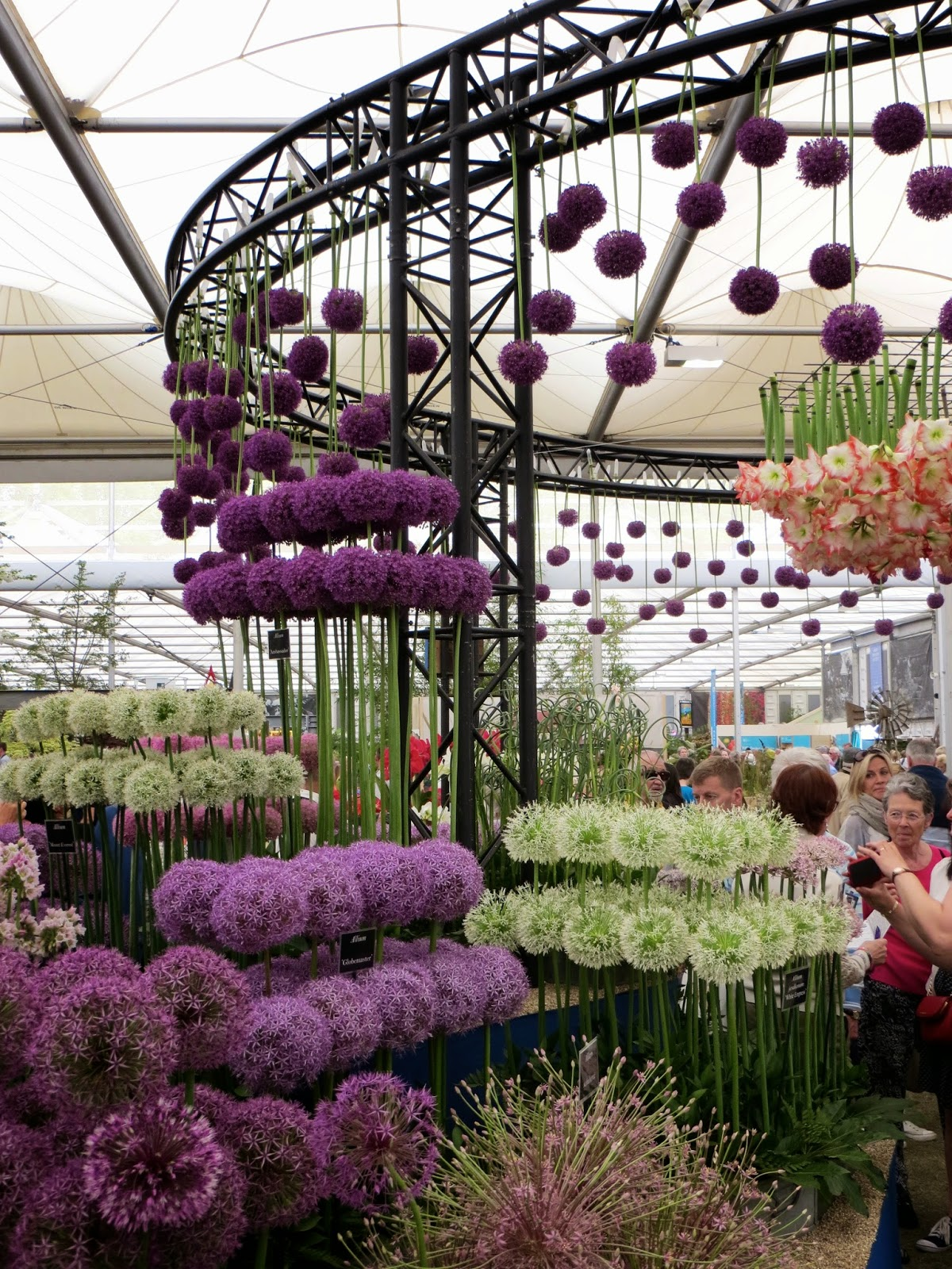 even carnivorous plants are beautiful at the chelsea garden show - Chelsea Garden Center