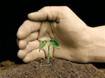 La necesidad de reforestar la península ibérica