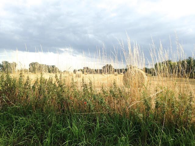 Golden Fields in Potter Heigham Norfolk