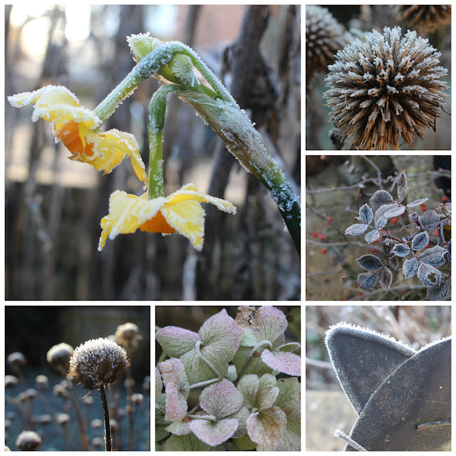 Frosted scenes from my garden this morning