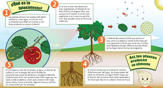 Te explico la fotosintesis